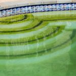 algae in pool