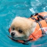 dog swimming